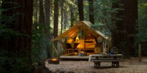 Safari glamping tent surrounded by redwood forest at Ventana Resort
