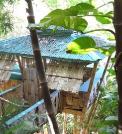 Tropical Treehouse